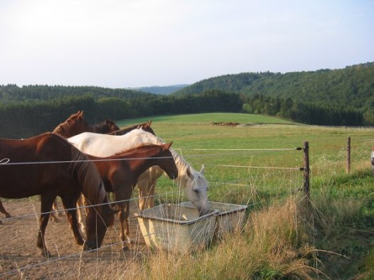 In climates with plenty of rainfall, like parts of Germany, horses can and do live on pasture grass—at least during the summer.