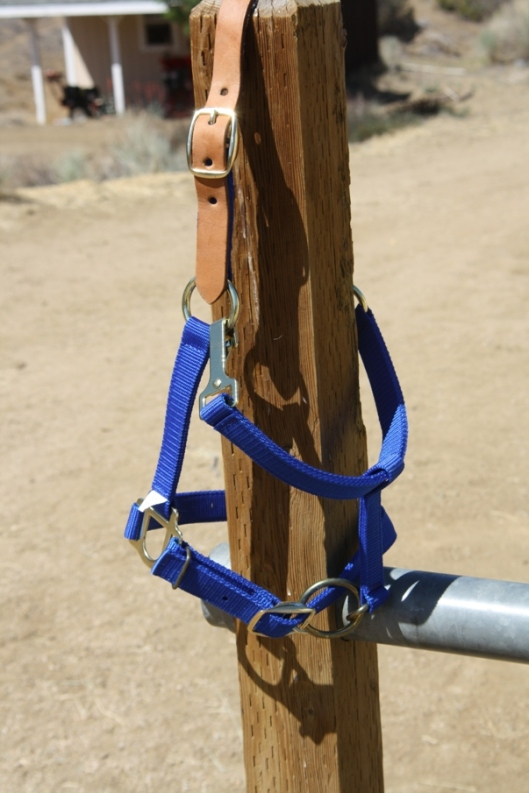 The throatlatch of this breakaway halter is fastened to the top ring of the cheekpiece by a snap facing in (and into the horse's face) instead of out.  This breakaway halter is defective. (Photo by Joan Fry)