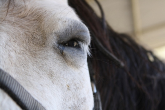 Even a first-time owner would know something awful has happened to her horse.  (Photo by Joan Fry)
