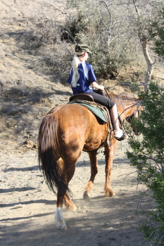 This trusting, trustworthy old gelding probably taught many beginning riders in addition to this lucky little girl.  (Photo by Joan Fry)