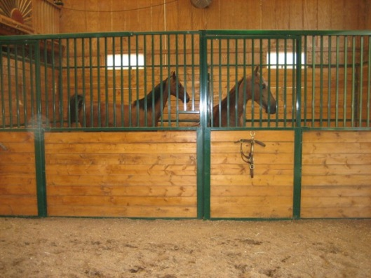 Show horses have shavings in the barn aisle as well as their stalls.  (Photo by Joan Fry)