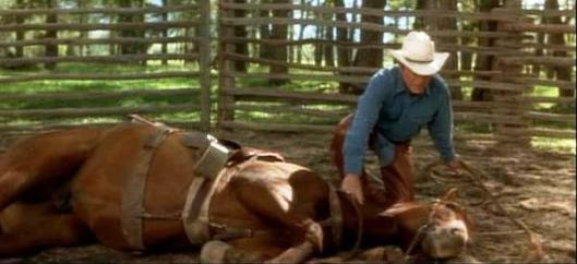 "A key scene in ""The Horse Whisperer"" that lasted about a third of a second on screen.  Robert Redford (or maybe Buck Brannaman, a real-life whisperer and Redford's stunt double), lays the horse down.  (Photo courtesy of  www.fanpop.com)"