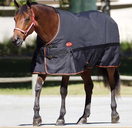 A blanketed horse.  (Photo by www.horsejournals.com)